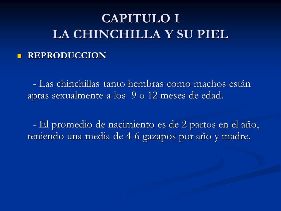 CAPITULO I LA CHINCHILLA Y SU PIEL REPRODUCCION REPRODUCCION - Las chinchillas tanto hembras como machos están aptas sexualmente a los 9 o 12 meses de edad.
