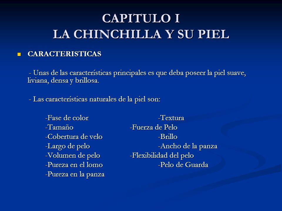 CAPITULO I LA CHINCHILLA Y SU PIEL CARACTERISTICAS CARACTERISTICAS - Unas de las características principales es que deba poseer la piel suave, liviana, densa y brillosa.