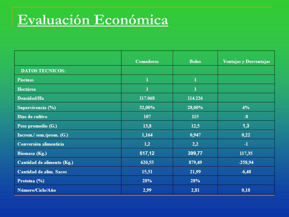 Evaluación Económica ComederosBoleo Ventajas y Desventajas DATOS TECNICOS: Piscinas11 Hectárea11 Densidad/Ha117.068114.226 Supervivencia (%)32,00%28,00%4% Días de cultivo107115-8 Peso promedio (G.)13,812,5 1,3 Increm./ sem./prom.