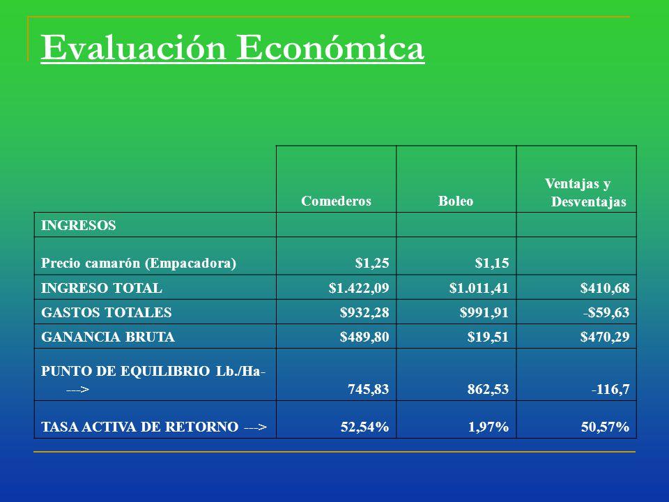 Evaluación Económica ComederosBoleo Ventajas y Desventajas INGRESOS Precio camarón (Empacadora)$1,25$1,15 INGRESO TOTAL$1.422,09$1.011,41$410,68 GASTOS TOTALES$932,28$991,91-$59,63 GANANCIA BRUTA$489,80$19,51$470,29 PUNTO DE EQUILIBRIO Lb./Ha- --->745,83862,53-116,7 TASA ACTIVA DE RETORNO --->52,54%1,97%50,57%