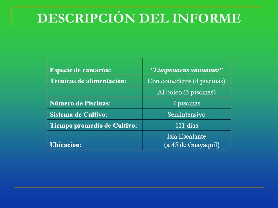 DESCRIPCIÓN DEL INFORME Especie de camarón: Litopenaeus vannamei Técnicas de alimentaciòn:Con comederos (4 piscinas) Al boleo (3 piscinas) Número de Piscinas:7 piscinas Sistema de Cultivo:Semintensivo Tiempo promedio de Cultivo:111 días Ubicación: Isla Escalante (a 45 de Guayaquil)