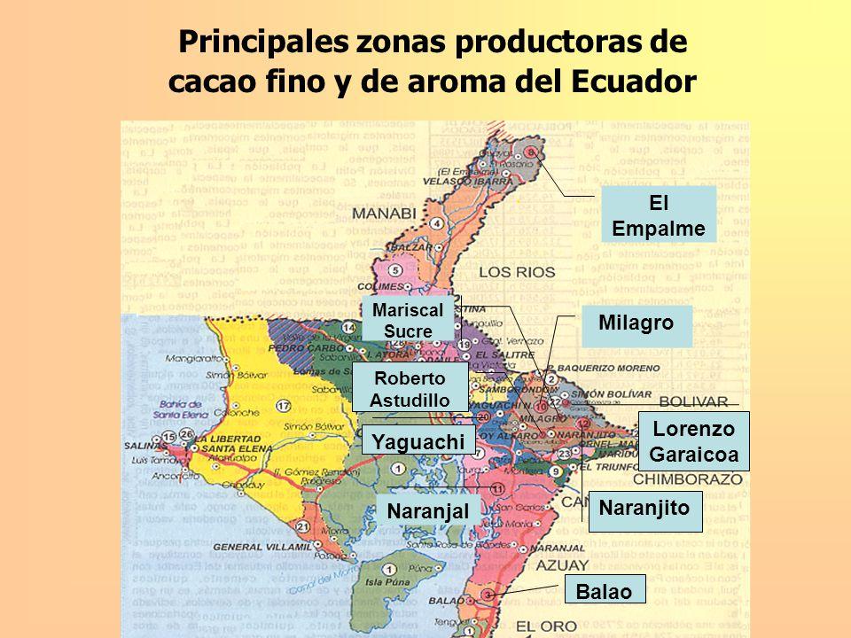Principales zonas productoras de cacao fino y de aroma del Ecuador Chone Calceta Pasaje Santa Rosa Echeandía Vinces San Juan Puebloviejo Ventanas Mocache Quevedo MANABI 14% EL ORO 5% BOLIVAR Y COTOPAXI 3% LOS RIOS 35%