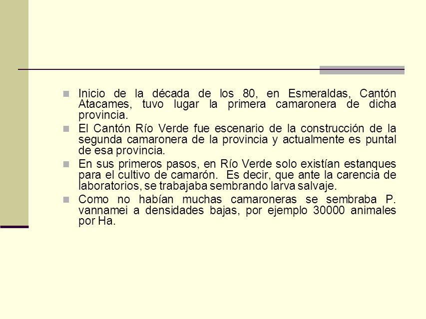 Inicio de la década de los 80, en Esmeraldas, Cantón Atacames, tuvo lugar la primera camaronera de dicha provincia. El Cantón Río Verde fue escenario