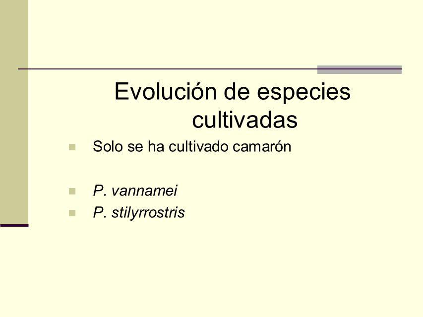 Evolución de especies cultivadas Solo se ha cultivado camarón P. vannamei P. stilyrrostris
