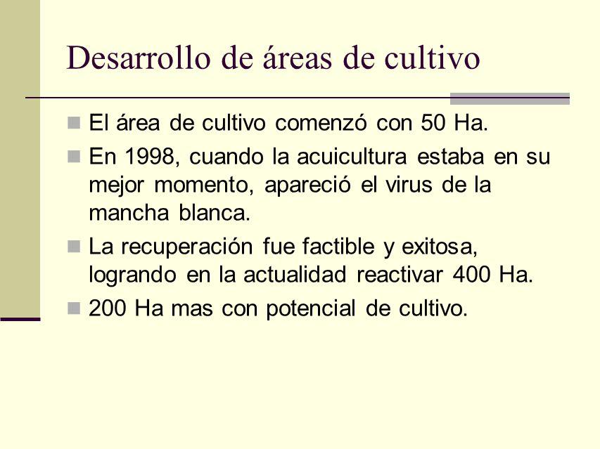Desarrollo de áreas de cultivo El área de cultivo comenzó con 50 Ha. En 1998, cuando la acuicultura estaba en su mejor momento, apareció el virus de l