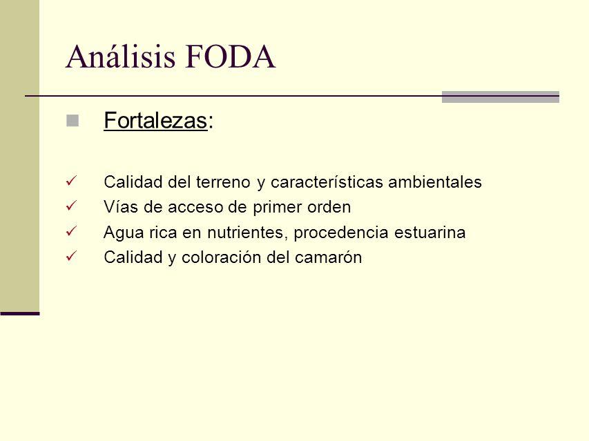 Análisis FODA Fortalezas: Calidad del terreno y características ambientales Vías de acceso de primer orden Agua rica en nutrientes, procedencia estuar
