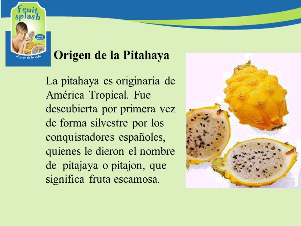 Origen de la Pitahaya La pitahaya es originaria de América Tropical. Fue descubierta por primera vez de forma silvestre por los conquistadores español