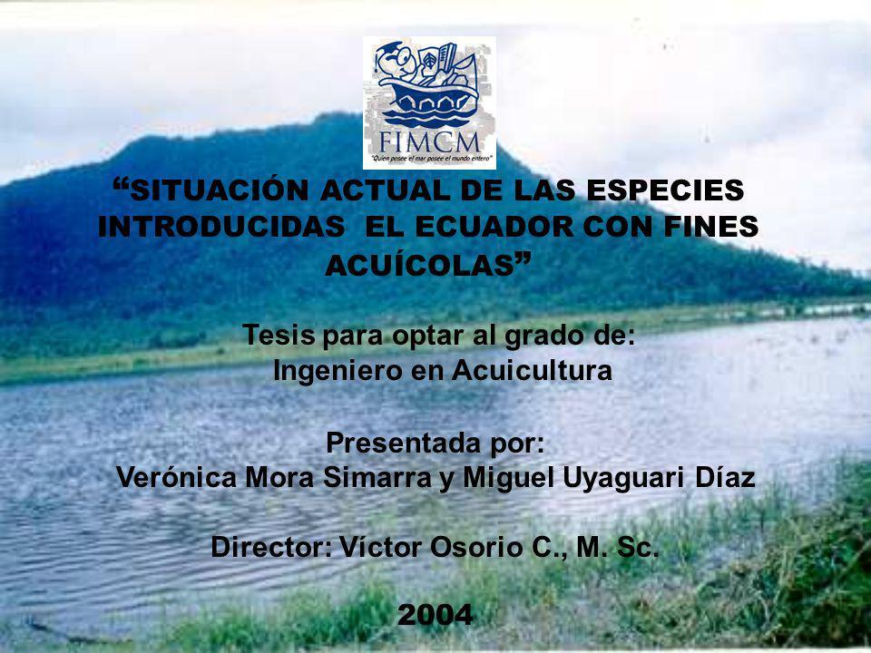SITUACIÓN ACTUAL DE LAS ESPECIES INTRODUCIDAS EL ECUADOR CON FINES ACUÍCOLAS Presentada por: Verónica Mora Simarra y Miguel Uyaguari Díaz Director: Ví