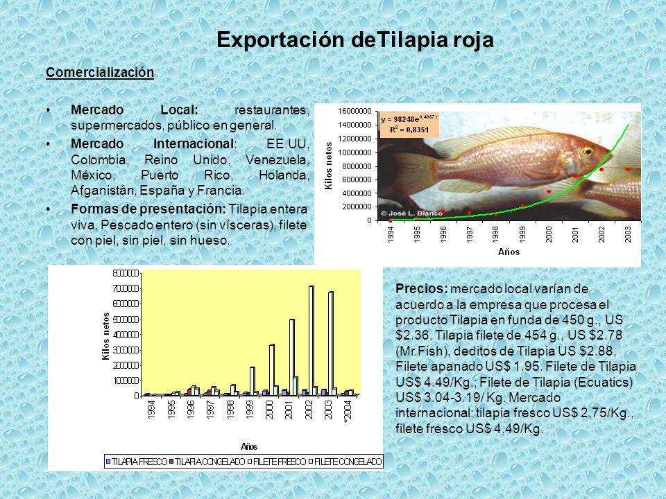 Exportación deTilapia roja Comercialización Mercado Local: restaurantes, supermercados, público en general. Mercado Internacional: EE.UU, Colombia, Re