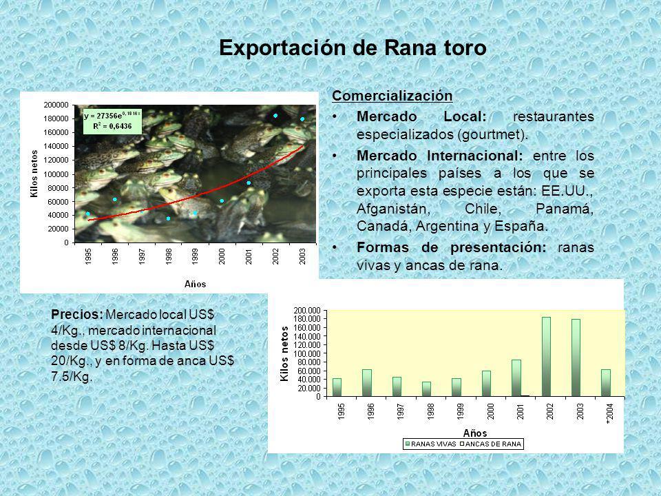 Exportación de Rana toro Comercialización Mercado Local: restaurantes especializados (gourtmet). Mercado Internacional: entre los principales países a
