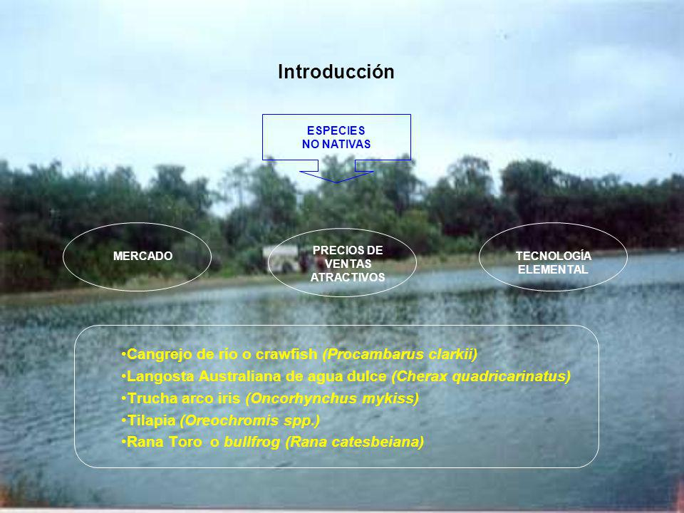 Breve reseña sobre la introducción de especies acuícolas ESPECIEORIGENAÑO INTRODUCCIÓN SISTEMA DE CULTIVO Cangrejo de río o crawfish (Procambarus clarkii) Louisiana (E.E.U.U) 1986-1988 cultivo extensivo Langosta Australiana (Cherax quadricarinatus) Australia1993 cultivos: extensivos, semi- intensivos y producción natural Trucha arco iris (Oncorhynchus mykiss) 1928Cultivo intensivo Tilapia (Oreochromis spp.)Africa1980Cultivo intensivo Rana Toro o bullfrog (Rana catesbeiana) Estados Unidos 1984Cultivo intensivo (sistema anfigranja) Estados Unidos