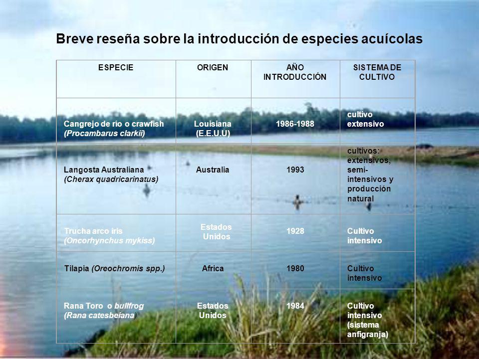 Breve reseña sobre la introducción de especies acuícolas ESPECIEORIGENAÑO INTRODUCCIÓN SISTEMA DE CULTIVO Cangrejo de río o crawfish (Procambarus clar