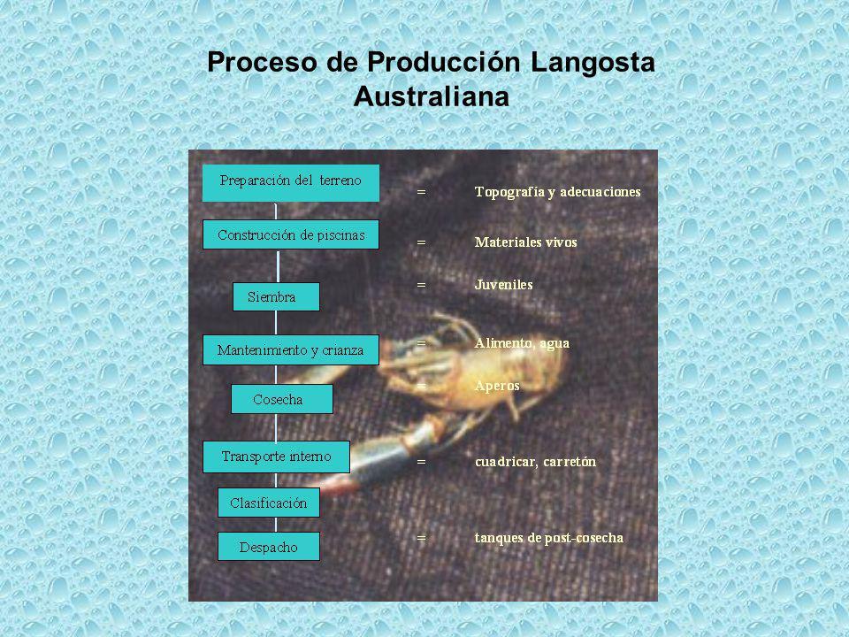 Costos de producción por especie Langosta Australiana Trucha arco iris Tilapia roja