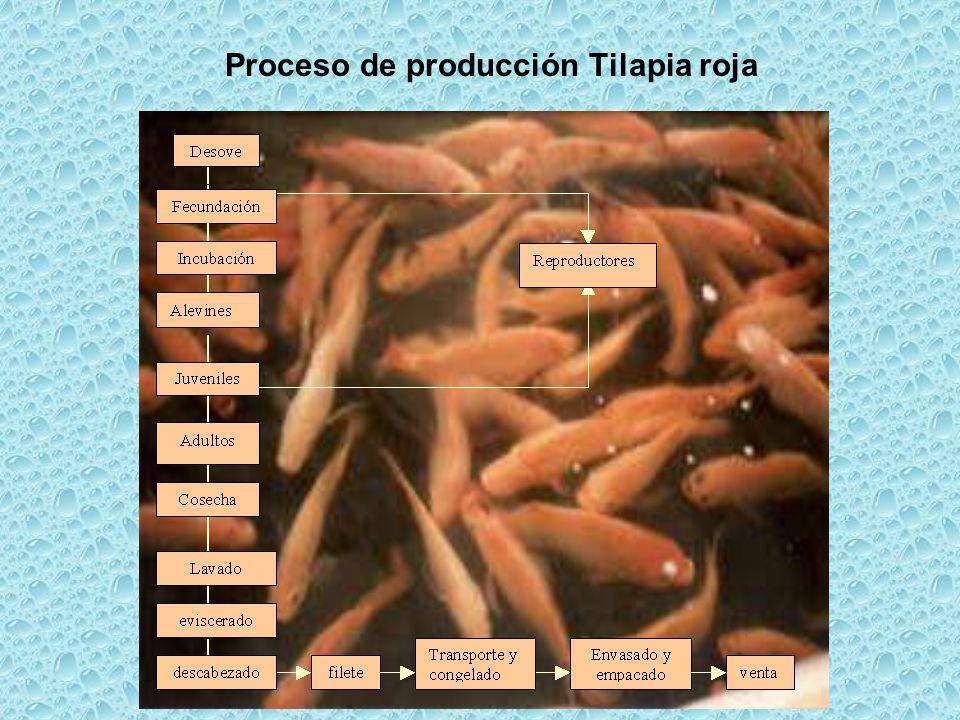 ConclusionesRecomendaciones Tilapia, trucha y rana toro han tenido un incremento significativo en sus producciones.