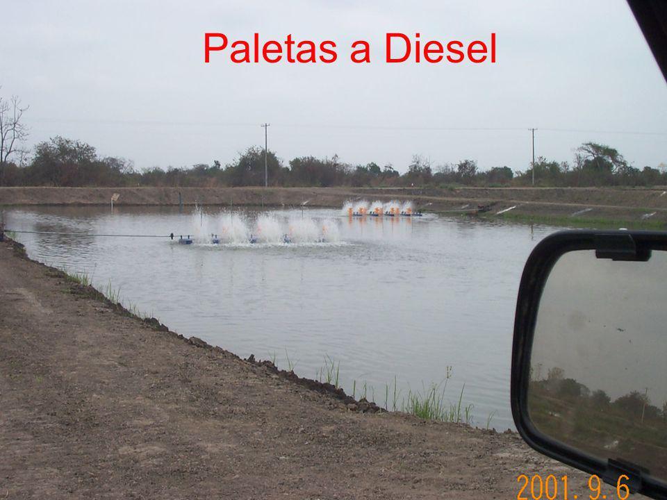 Paletas a Diesel