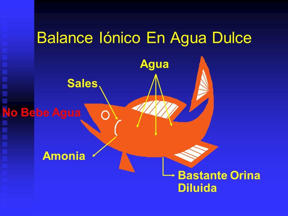 Regulación Osmótica / Excreción Moluscos: Moluscos: Osmoconformes. Osmoconformes. Excreción por nefridos y branquias. Excreción por nefridos y branqui