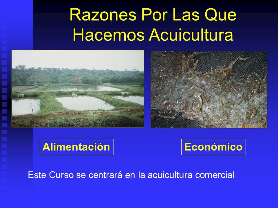 Razones Por Las Que Hacemos Acuicultura AlimentaciónEconómico Este Curso se centrará en la acuicultura comercial