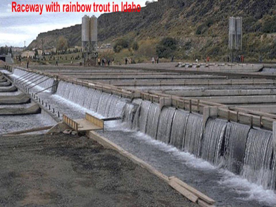 Raceway Canal artificial, normalmente de concreto donde siempre hay agua corriente y recambio de agua. Canal artificial, normalmente de concreto donde