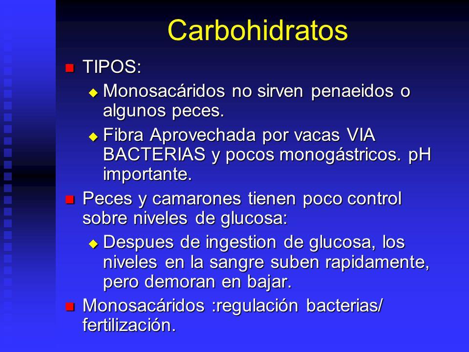Carbohidratos C n (H 2 O) m. C n (H 2 O) m. Principal función es como fuente de energía. Principal función es como fuente de energía. Algunos sirven d