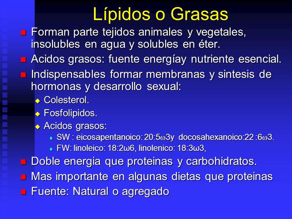 Carbohidratos TIPOS: TIPOS: Monosacáridos no sirven penaeidos o algunos peces. Monosacáridos no sirven penaeidos o algunos peces. Fibra Aprovechada po