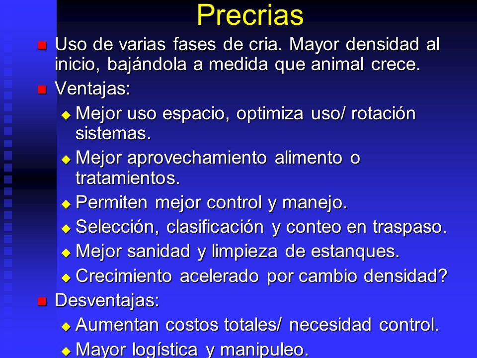Obtención De Semilla Reproducción: Reproducción: Selección reproductores. Selección reproductores. Maduración. Natural o inducida. Maduración. Natural