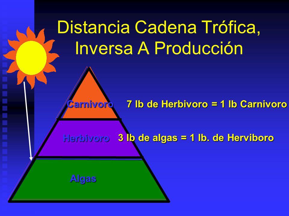 Fertilización Animales dependen directa o indirectamente de alimento proporcionados por plantas verdes. Animales dependen directa o indirectamente de