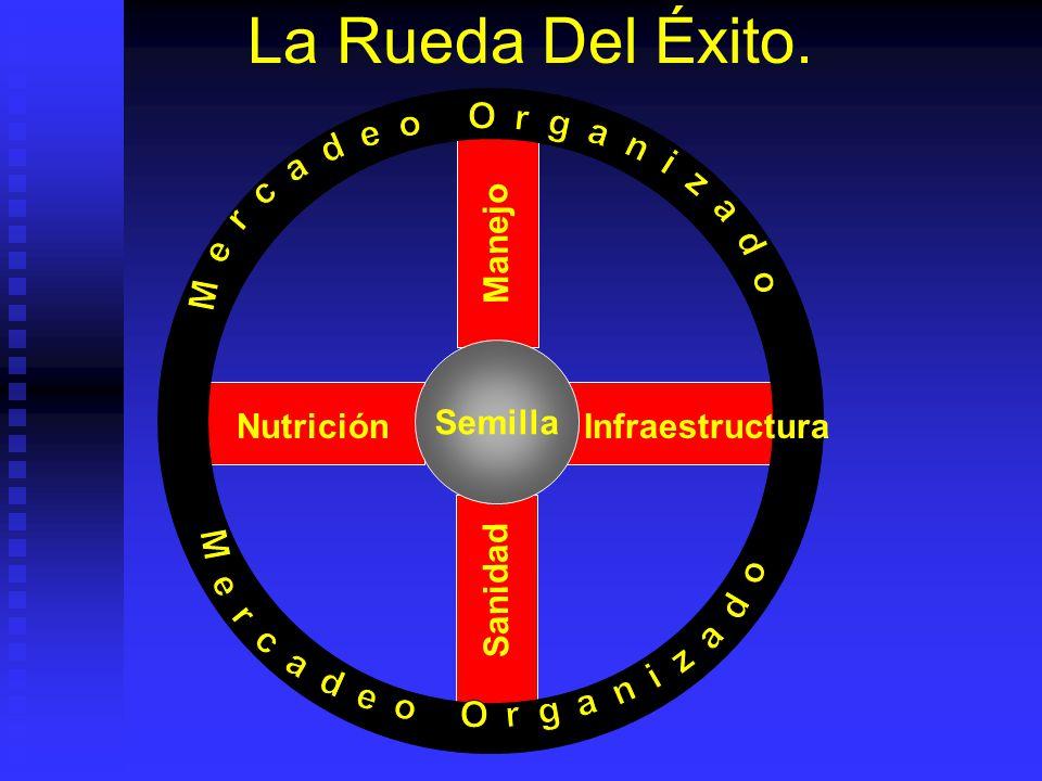 Procesamiento, Comercialización Dependiendo de cadena de distribución es o no controlado por productor. Dependiendo de cadena de distribución es o no