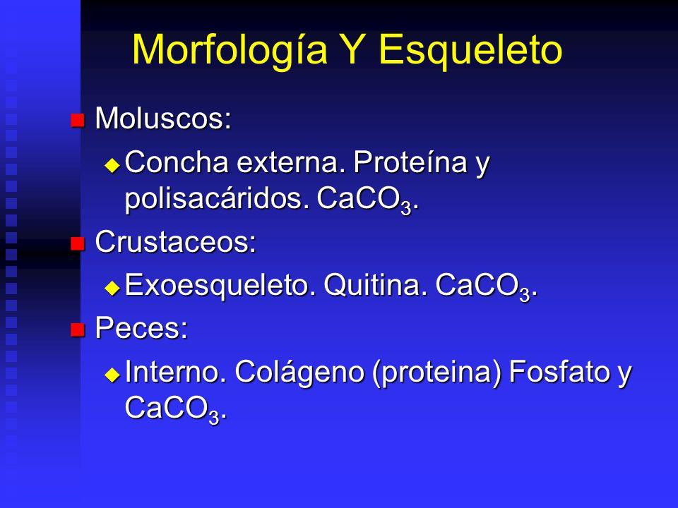Grupos A Comparar Moluscos: Moluscos: Bivalvos. Bivalvos. 30% moluscos, 90% spp. cultivadas. 30% moluscos, 90% spp. cultivadas. Crustaceos: Crustaceos