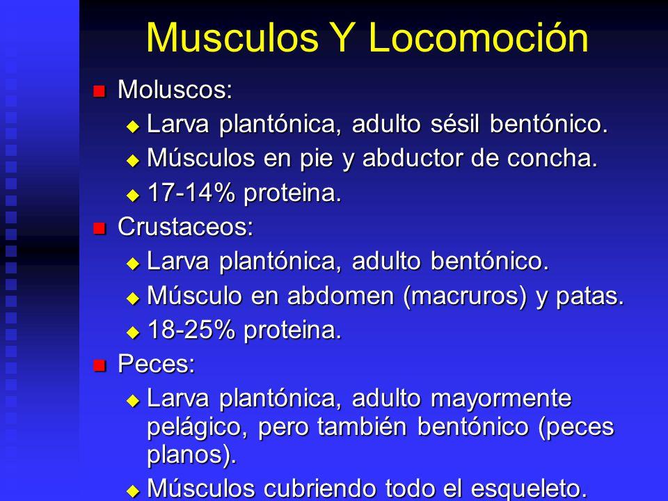 Morfología Y Esqueleto Moluscos: Moluscos: Concha externa. Proteína y polisacáridos. CaCO 3. Concha externa. Proteína y polisacáridos. CaCO 3. Crustac