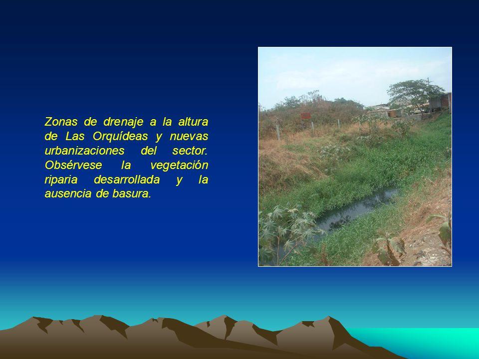 Zonas de drenaje a la altura de Las Orquídeas y nuevas urbanizaciones del sector. Obsérvese la vegetación riparia desarrollada y la ausencia de basura