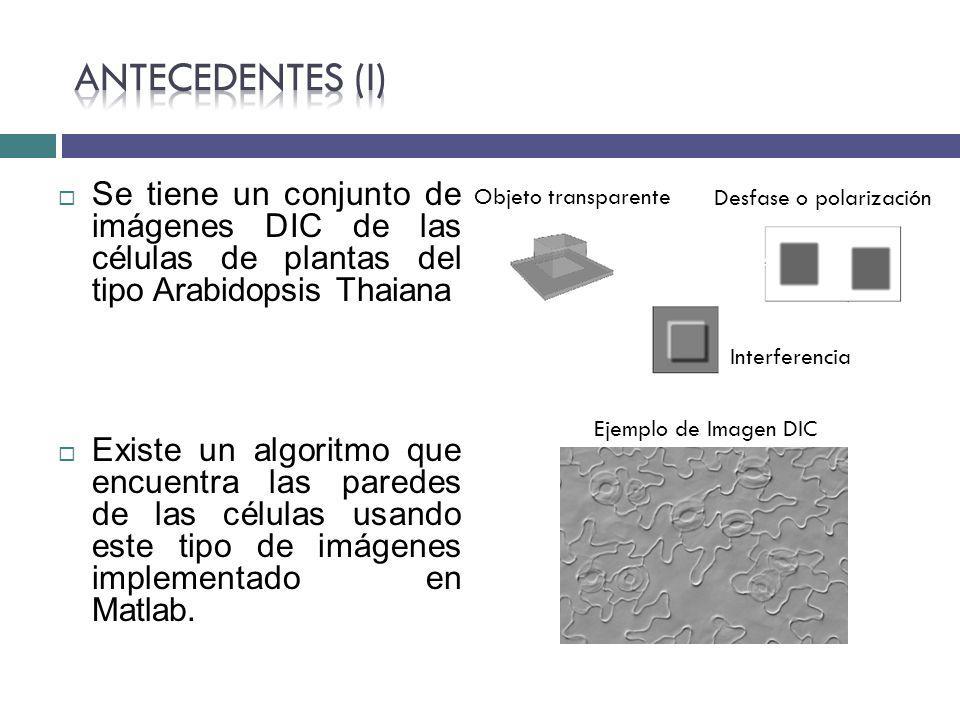 Objeto transparente Desfase o polarización Interferencia Ejemplo de Imagen DIC Se tiene un conjunto de imágenes DIC de las células de plantas del tipo