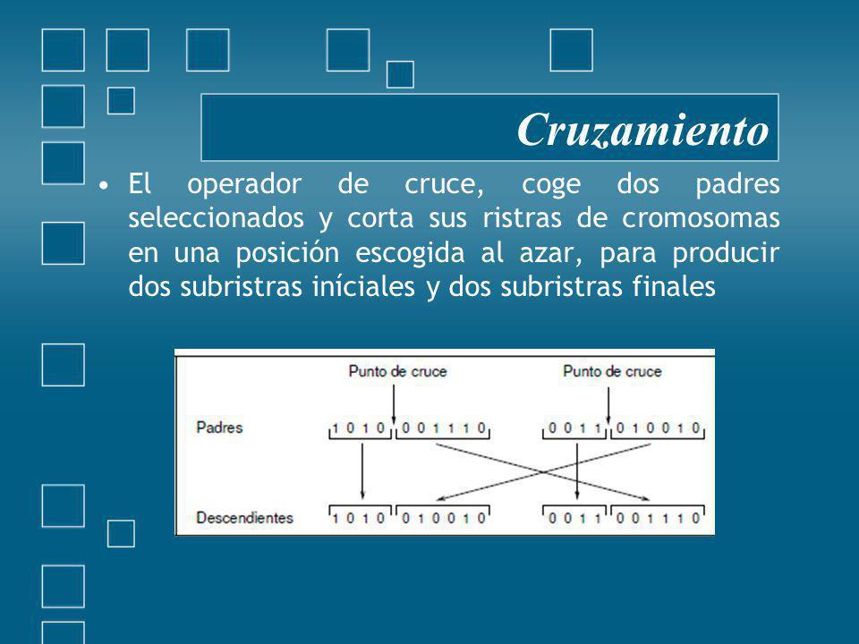 El operador de cruce, coge dos padres seleccionados y corta sus ristras de cromosomas en una posición escogida al azar, para producir dos subristras iníciales y dos subristras finales Cruzamiento