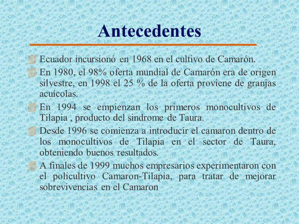 CAPITULO 2 ANALISIS DEL MERCADO