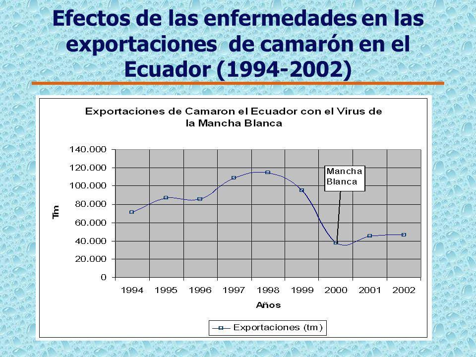 Efectos de las enfermedades en las exportaciones de camarón en el Ecuador (1979-2000)