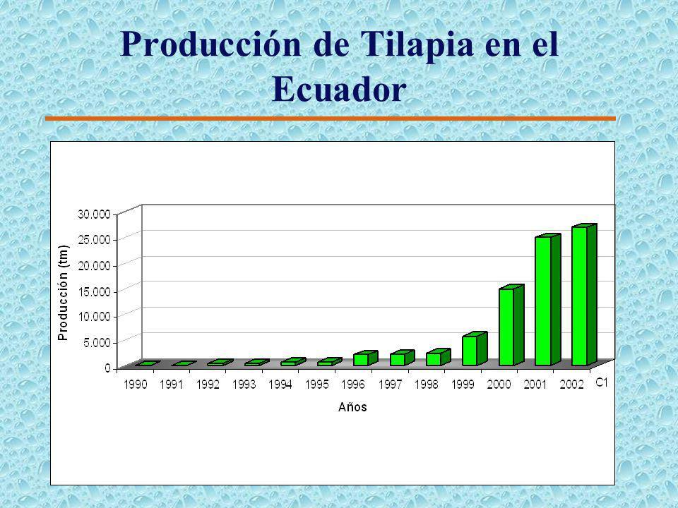 Efectos de las enfermedades en las exportaciones de camarón en el Ecuador (1994-2002)