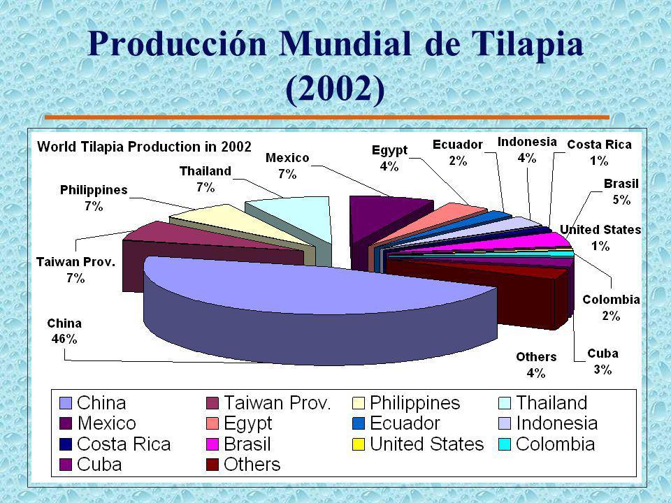 Escenario de capturas pesqueras para el 2010 (FAO) Escenario Pesimista Escenario Optimista Captura de Pesquerías 80105 Producción de Acuacultura 2739