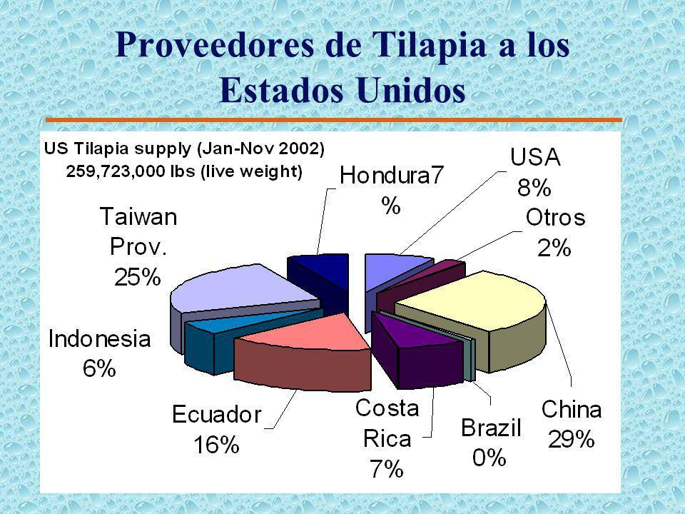Tendencias Futuras (Tilapia) 4Incremento en la demanda de todas las presentaciones. 4 El aumento de la demanda será mas grande para los filetes fresco