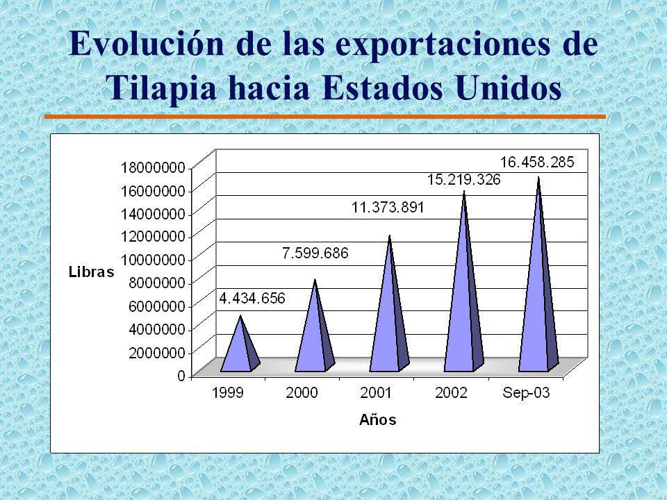 Consumo de Tilapia en Los Estados Unidos de Norteamerica kg (Enero_Noviembre 2002)