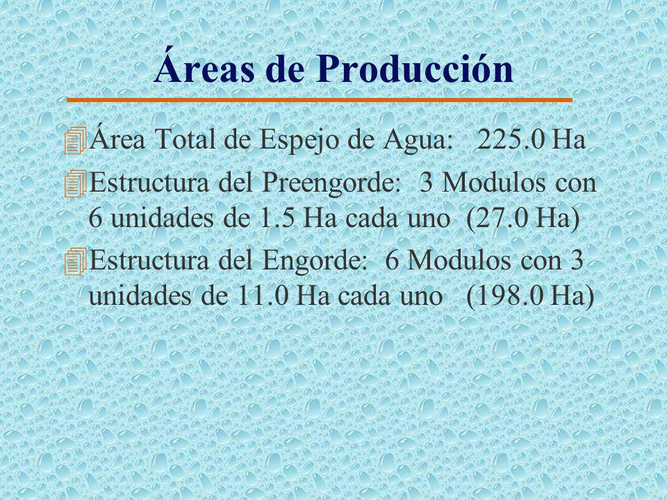 Características del Cultivo 4Generalidades: 4Fases del Cultivo: Preengorde y Engorde 4Especie de Cultivo: 4Tilapia Roja (principal) 4Camarón (secundar