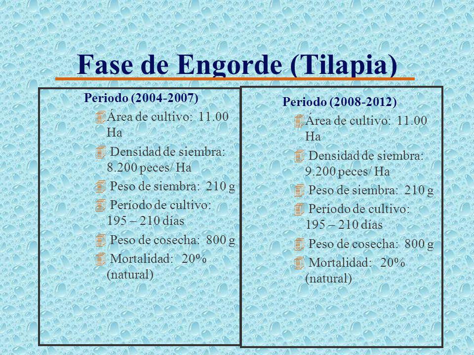 Fase de Preengorde (Tilapia) Periodo (2004-2007) 4Area de cultivo: 1.50 Ha 4Densidad siembra: 40.000 juv./ Ha 4Peso de siembra: 60 g 4Período de culti