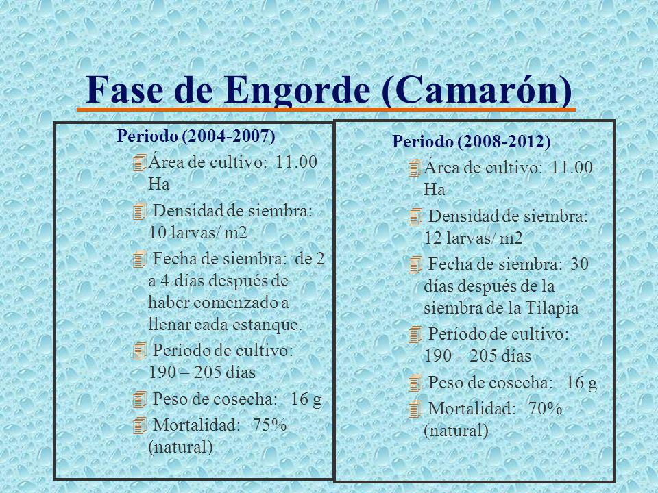 Fase de Engorde (Tilapia) Periodo (2004-2007) 4Área de cultivo: 11.00 Ha 4 Densidad de siembra: 8.200 peces/ Ha 4 Peso de siembra: 210 g 4 Período de