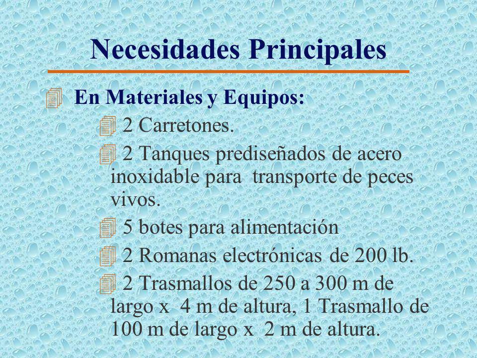 Necesidades Principales 4 En Infraestructura: 4 Lastrado de muros especialmente perimetrales con una corona de 3.5 m y 0.25 m de espesor 4 En Maquinar