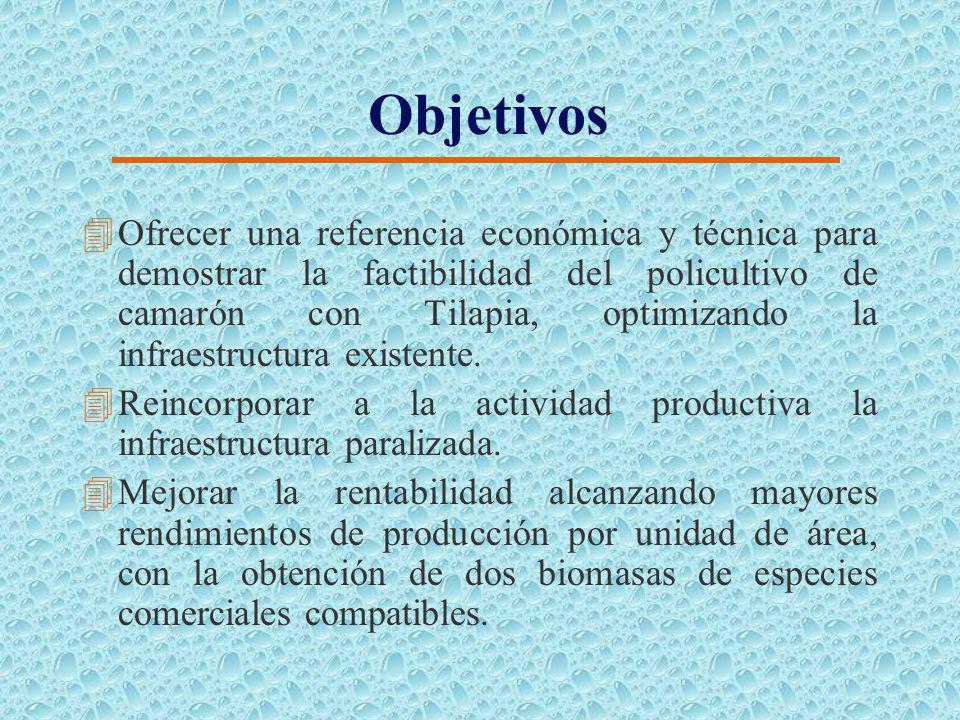 Objetivos 4Ofrecer una referencia económica y técnica para demostrar la factibilidad del policultivo de camarón con Tilapia, optimizando la infraestructura existente.