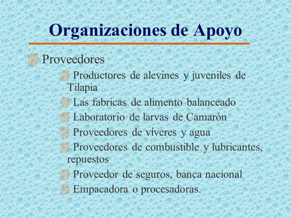 Requerimientos de Personal 4 Mano de obra directa 35 personas, más 8 eventuales de transferencia. 4 Mano de obra indirecta 22 personas, más 12 eventua