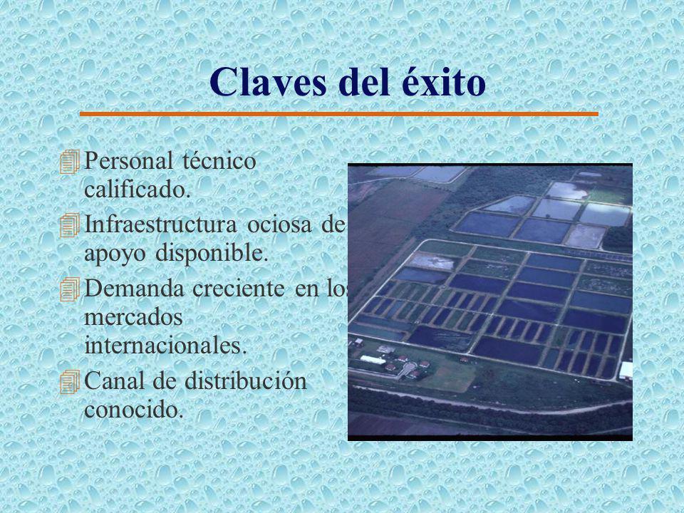 Fase de Preengorde (Tilapia) Periodo (2004-2007) 4Area de cultivo: 1.50 Ha 4Densidad siembra: 40.000 juv./ Ha 4Peso de siembra: 60 g 4Período de cultivo: 75- 90 días 4Peso de cosecha para transferencia: 210 g 4Mortalidad: 25% (15% natural y 10% por depredación) Periodo (2008-2012) 4Area de cultivo: 1.50 Ha 4Densidad siembra: 45.000 juv./ Ha 4Peso de siembra: 60 g 4Período de cultivo: 75- 90 días 4Peso de cosecha para transferencia: 210 g 4Mortalidad: 25% (15% natural y 10% por depredación)