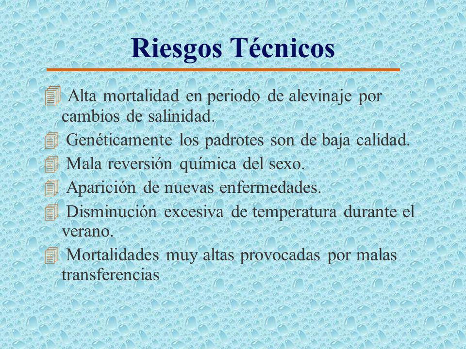 Riesgos de Mercado 4 Honduras reciba inversión extranjera para producción de Tilapia, debido a sus bajos costos de operación. 4China aumente su oferta