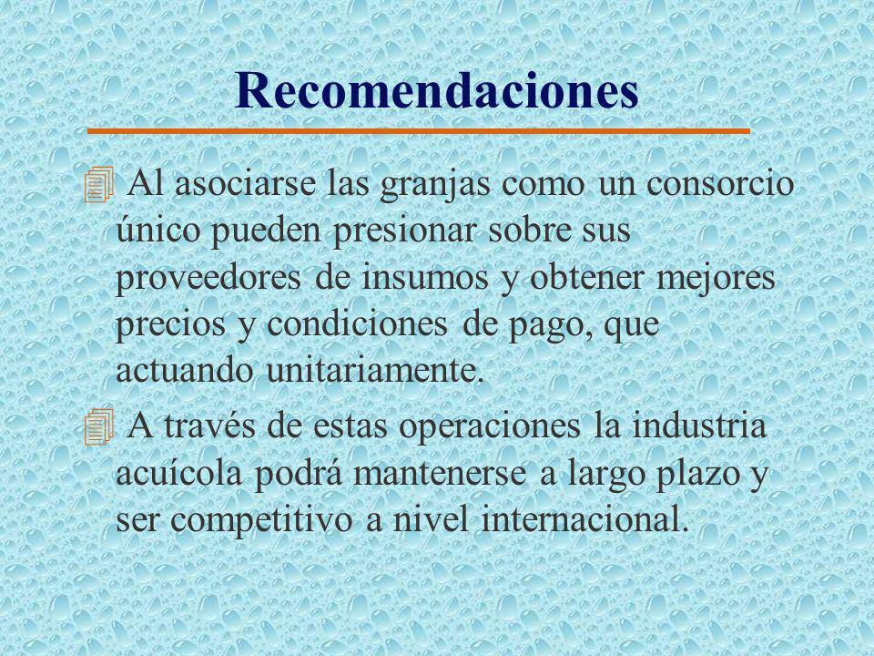 Recomendaciones 4 La industria acuícola se encuentra fraccionada en medianos productores de tilapia, con lo que el poder de negociación sobre los prov