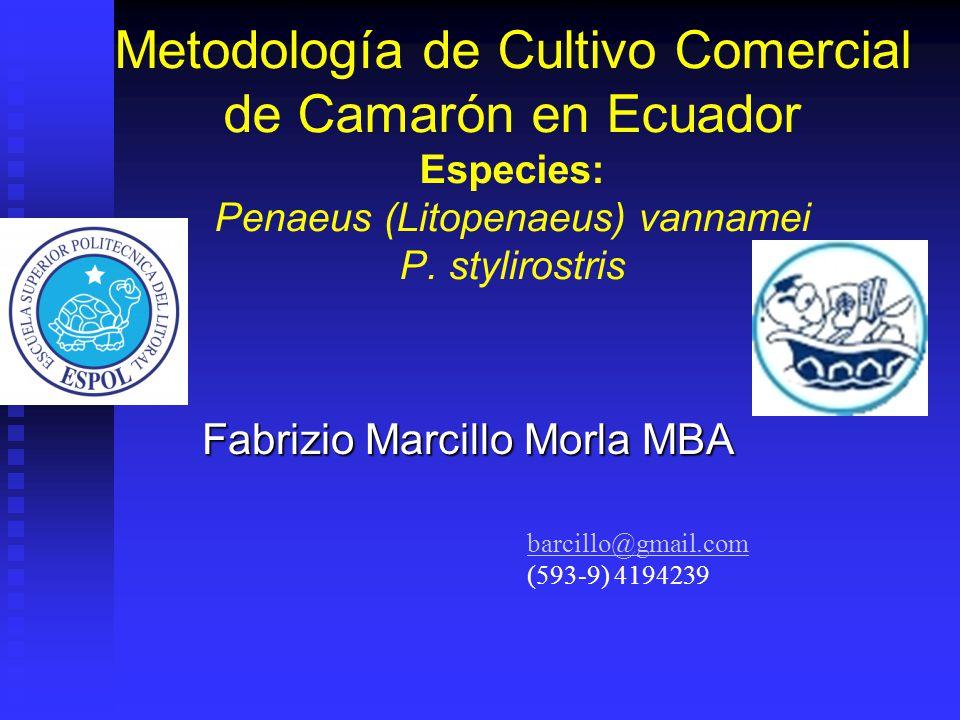 Metodología de Cultivo Comercial de Camarón en Ecuador Especies: Penaeus (Litopenaeus) vannamei P.