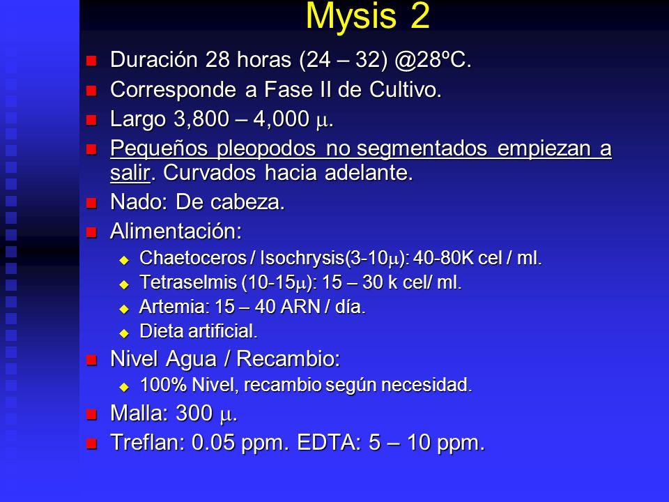Mysis 1