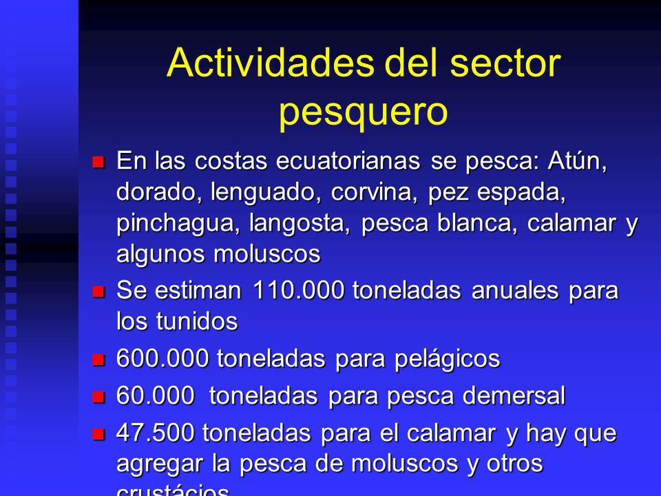 Actividades del sector pesquero En las costas ecuatorianas se pesca: Atún, dorado, lenguado, corvina, pez espada, pinchagua, langosta, pesca blanca, c